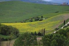 Gelbe H?gel des Rapssamens mit Zypressen und gr?nen Wiesen H?gel von Toskana Landschaft Val d ?Orcia im Fr?hjahr stockfotos