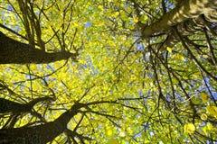 Gelbe Herbstblätter lizenzfreie stockbilder