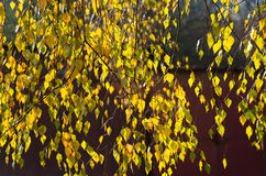 Gelbe Herbstblätter Lizenzfreie Stockfotos