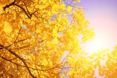Gelbe Herbstblätter Lizenzfreie Stockfotografie