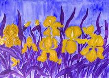 Gelbe Iris Lizenzfreies Stockbild