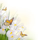 Gelbe Iris mit gelben Gänseblümchen Lizenzfreie Stockbilder