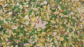 Gelbe Jahreszeit des Herbstes Stockfotografie