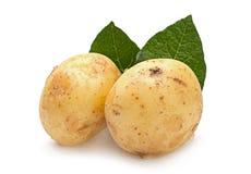 Gelbe junge Kartoffel lokalisiert Stockfotos