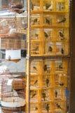 Gelbe Käfige für Vögel Lizenzfreie Stockfotos