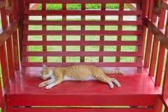 Gelbe Kätzchenkatze schläft auf einer roten Bank im Park am heißen Sommertag lizenzfreies stockbild