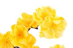 Gelbe künstliche Blumen Stockbild