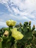 Gelbe Kaktus-Blumen durch den Strand stockfotos