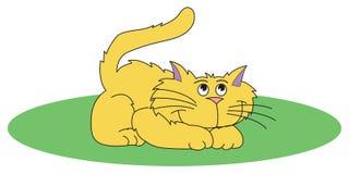 Gelbe Katze Lizenzfreies Stockfoto