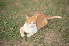 Gelbe Katze, die auf dem Rasen liegt Lizenzfreies Stockfoto