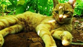 Gelbe Katze stockbilder