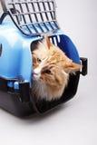 Gelbe Katze im Transportkasten Stockfotos
