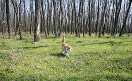 Gelbe Katze im Wald Stockfotos