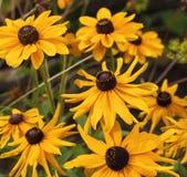 Gelbe Kegelblumen auf unscharfem Hintergrund Lizenzfreies Stockbild
