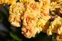 Gelbe kleine Blumen Stockfoto