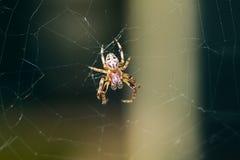 Gelbe kleine Spinne Lizenzfreie Stockfotos