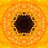 Gelbe konzentrische Blumen-Mitte. Mandala Kaleidoscopic-Design stockfoto