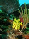 Gelbe Koralle Stockbilder