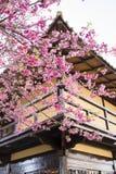 Gelbe Kornelkirsche-Blume Lizenzfreie Stockbilder