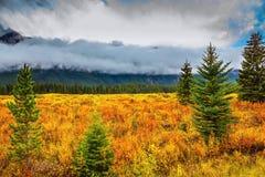 Gelbe Kräuter und immergrüne Tannenbäume Lizenzfreies Stockbild