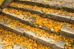 Gelbe leafes Stockfoto
