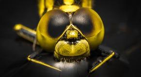 Gelbe Libelle Stockfotografie