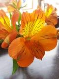 gelbe Lilie auf dem Tisch stockbild