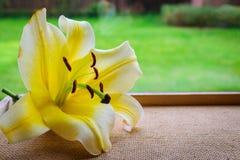 Gelbe Lilienblume Lizenzfreie Stockbilder