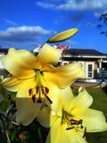 Gelbe Lilienblumen gegen Himmel und Haus lizenzfreie stockbilder