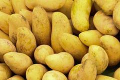 Gelbe Mango auf Markt - exotische thailändische Früchte stockfotos
