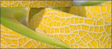 Gelbe Melone Lizenzfreies Stockbild