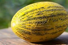 Gelbe Melone Stockfoto