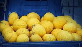Gelbe Melonenernte Stockfoto