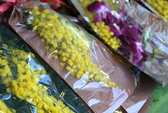 Gelbe Mimose und Orchidee für den Tag der Frauen Stockfoto