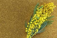 Gelbe Mimosen in der Blüte für den internationalen Tag der Frauen mit Lizenzfreie Stockfotos
