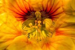 Gelbe Mitte der Blume lizenzfreie stockbilder