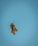 Gelbe Motte auf einem Fenster Stockbilder