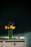 Gelbe Narzisse blüht mit der purpurroten Tulpe, die im Vase mit folgendem bösem Korb der grünen Wand auf weißen Regalen blüht stockfoto