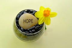 Gelbe Narzisse und die Wort-Hoffnung Lizenzfreie Stockfotografie