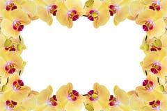 Gelbe Orchidee Stockfotos