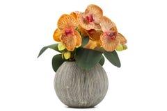Gelbe Orchidee blüht im dekorativen keramischen Blumentopf, der auf Weiß lokalisiert wird Stockfotografie