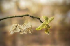 Gelbe Orchidee im Profil Lizenzfreie Stockbilder