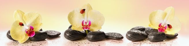 Gelbe Orchideen und Kiesel mit Marienkäfer Stockfoto
