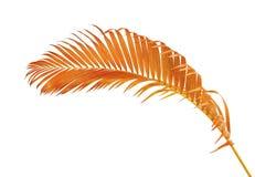 Gelbe Palmbl?tter Dypsis-lutescens oder goldene Stockpalme, Arekanusspalmbl?tter, tropisches Laub lokalisiert auf wei?em Hintergr stockfoto