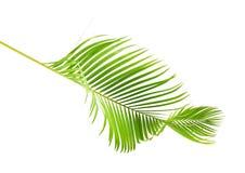 Gelbe Palmbl lizenzfreie stockbilder
