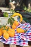 Gelbe Peperoni und gelbe Tomaten mit purpurrotem Basilikum Stockfotos