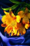 Gelbe peruanische Lilie auf einer blauen Seide Lizenzfreie Stockfotos
