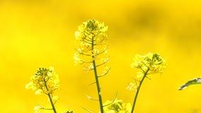 Gelbe Pflanzenblätter in Windy Day stock video footage