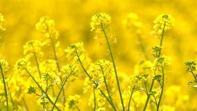 Gelbe Pflanzenblätter in Windy Day stock video