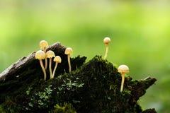 Gelbe Pilze Lizenzfreies Stockbild